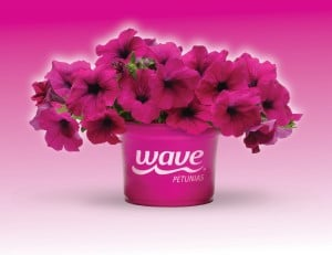 WavePetuniaPurple-logopot