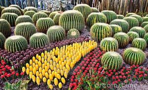 colorful-cactus-21979036